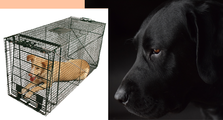 Dog Whining in Crate