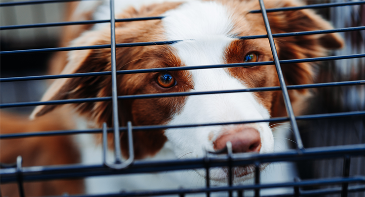 Handling Dog Whining in Crate