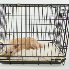 Methods for Kennel Training a Puppy