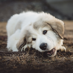 Ways to Stop Puppy Chewing